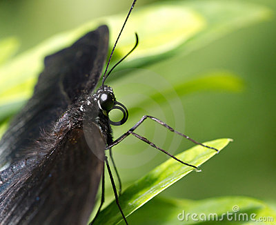 Exotic butterfly on a leaf