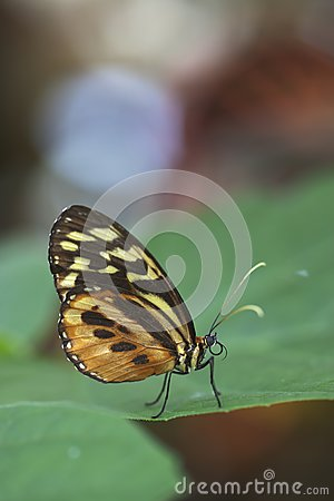 Exotic Butterfly on Leaf