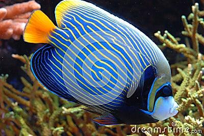 Exotic Fish 20