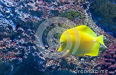 Exotic fish a
