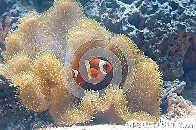 Exotic fish 3
