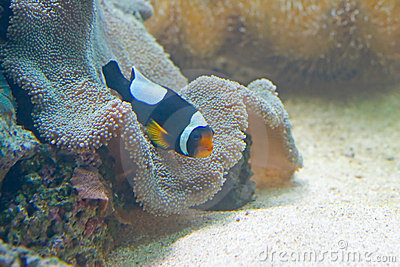 Exotic fish 5