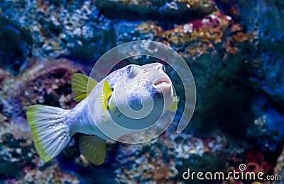 Exotic fish c