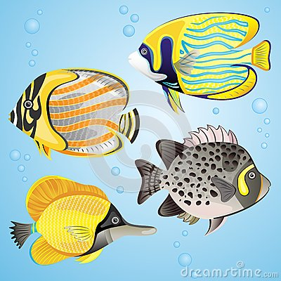 Exotic fish set
