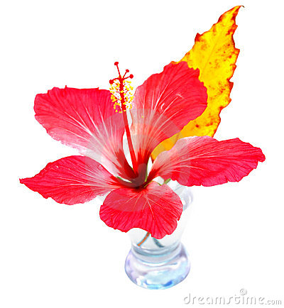 Exotic flower in the vase
