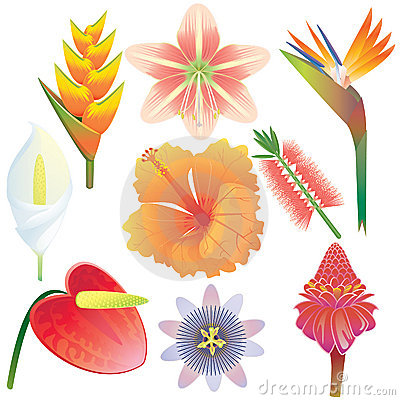 Exotic flowers collection