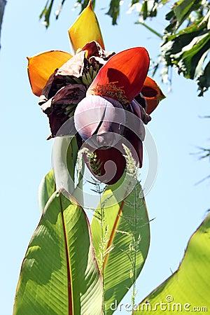 Exotic fruit Flower