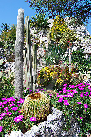 Free Exotic Garden Royalty Free Stock Photography - 5290067