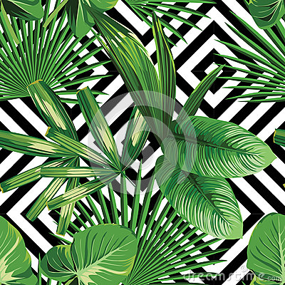 Free Exotic Jungle Plant Tropical Palm Leaves Royalty Free Stock Photo - 73556925