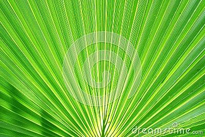 Exotic Palm Leaf