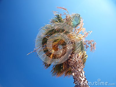 Exotic palm tree on a windy day