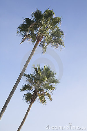Exotic palm trees