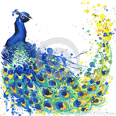 Exotic peacock T-shirt graphics. peacock illustration with splash watercolor textured background. unusual illustration watercolor Cartoon Illustration