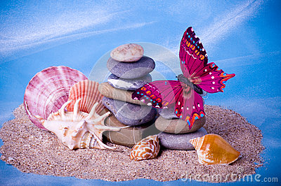 Exotic shells, stones and butterfly