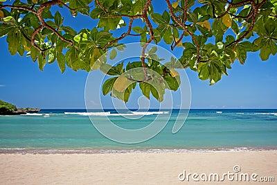 Exotic tropical beach of Bali