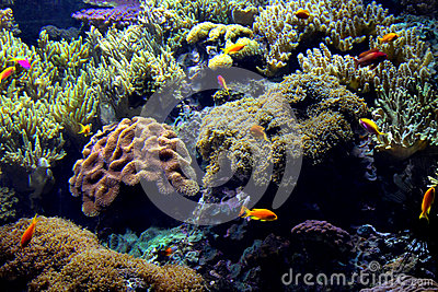 Exotic underwater sea life
