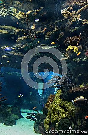 Exotic underwater sea life