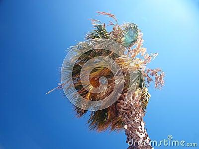 Exotische Palme an einem windigen Tag