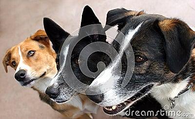 Expectant canine trio