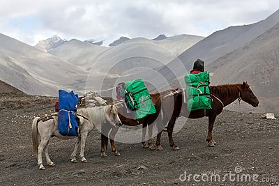 Expedition horse