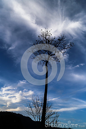 Free Exploding Cloud Keeps Dying Tree Alive Stock Images - 55076074