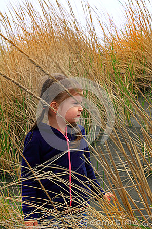Free Exploring Beach Grass Royalty Free Stock Images - 39344129