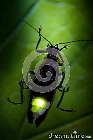 Exponerande blixt för felfirefly