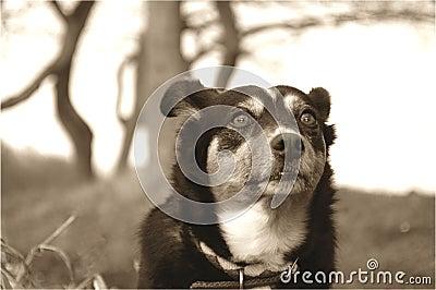 Expressão do cão