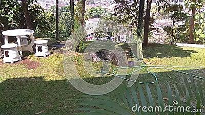 Extensión de la hierba verde en el parque Detalle de la hierba verde almacen de metraje de vídeo