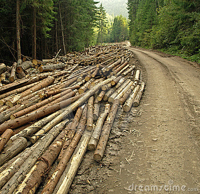 Extensive logging