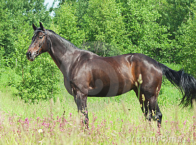 Exterior of beautiful black mare
