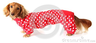 Extra Long Valentine Dog Royalty Free Stock Photography - Image: 28519397