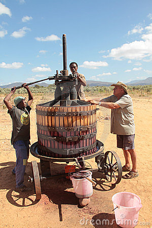 Extracting red grape juice for wine-making Editorial Photo