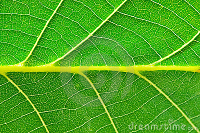 Extreme close up of green leave