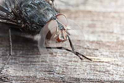 Extreme closeup of fly