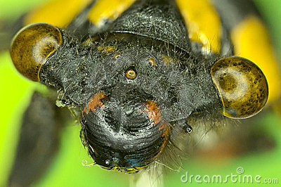 Extreme insect closeup.