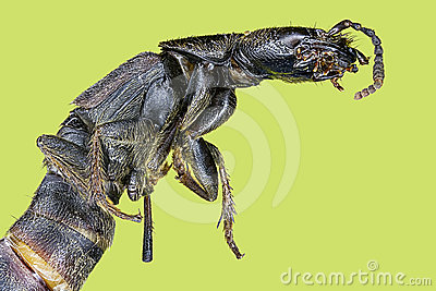 Extreme macro centipede