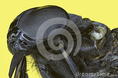 Extreme macro insect fly