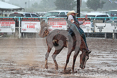 Extreme Rodeo Editorial Stock Image