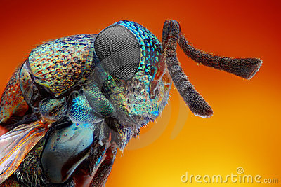 Extreme sharp and detailed study of 2 mm wasp