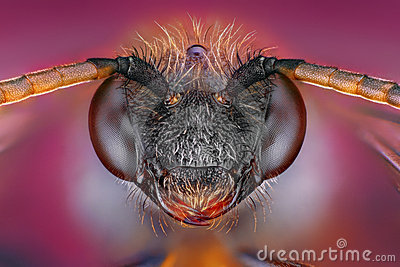 Extreme sharp and detailed study of bee head