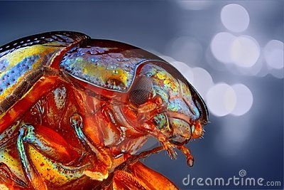 Extreme sharp and detailed study of Chrysolina