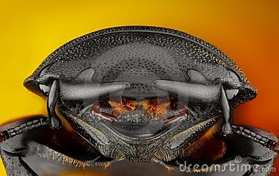 Extreme sharp and detailed study of Dorcus