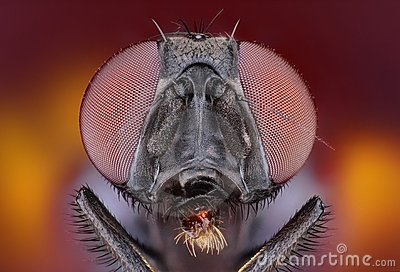 Extreme sharp and detailed study of fly