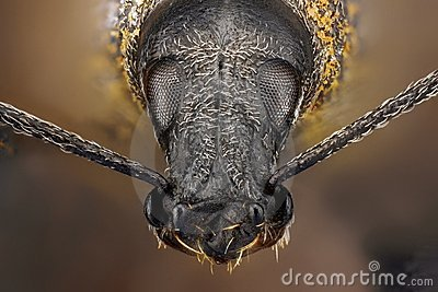 Extreme sharp and detailed study of weevil