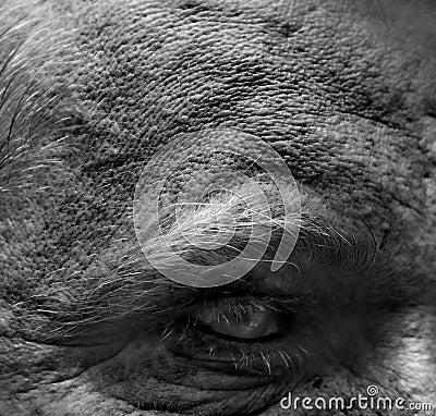 Free Extreme Skin Detail Royalty Free Stock Image - 5538546