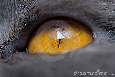Extremely close-up of cat eye