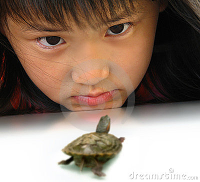 Eye contact between girl and turtle