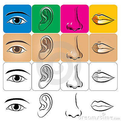 Free Eye Ear Nose Lip Royalty Free Stock Photos - 10584428