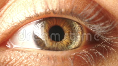 Eye iris contracting. Close-up of eye iris contracting
